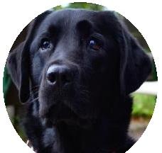 Terapevtski pes v šoli