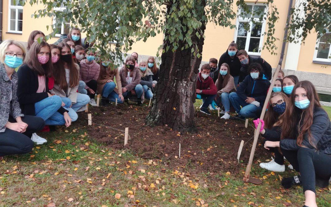 Projekt sajenja rumenih žafranov